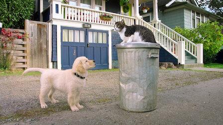 觀賞貓咪學院。第 1 季第 8 集。