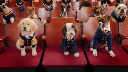 觀賞流浪犬的開學日。第 1 季第 1 集。